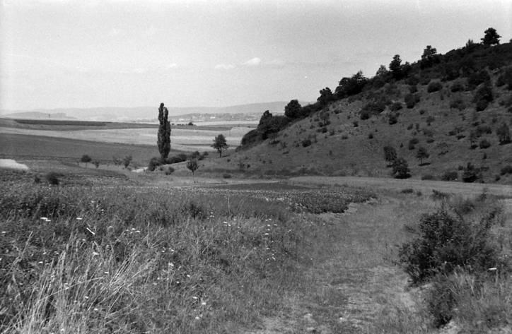 Weingarten 1952