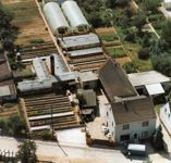 Gärtnerei Ibold 1991